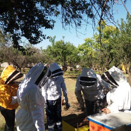 Taller de apicultura