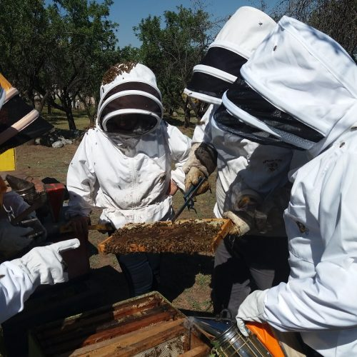 Taller de apicultura1